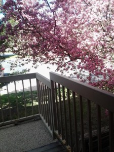 Spring is right outside the door!